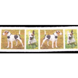 5/8 Inch Jack Russell Terrier Cotton Ribbon, 1 Yard