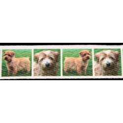 Norfolk Terrier Cotton Ribbon - Various Lengths & Widths