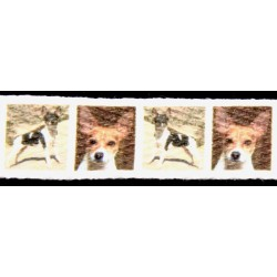 5/8 Inch Rat Terrier Cotton Ribbon, 1 Yard
