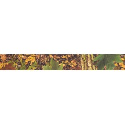 1 Inch Southern Forest Camo Photo Quality Polyester