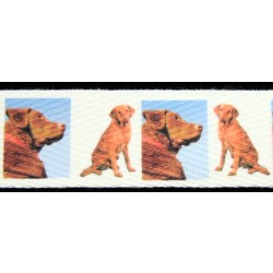 1 Inch Chesapeake Bay Retriever Cotton Ribbon, 1 Yard