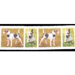 Jack Russell Terrier Cotton Ribbon - Various Lengths & Widths