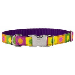 Premium Citrus Blocks Ribbon Dog Collar Limited Edition