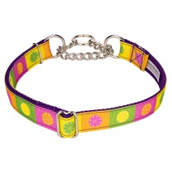 Citrus Blocks Ribbon Half Check Dog Collar - Large Limited Edition