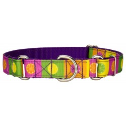 Citrus Blocks Ribbon Martingale Dog Collar Limited Edition