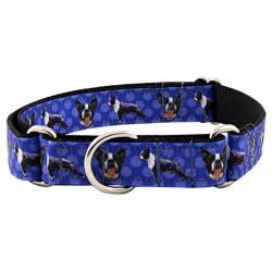 Boston Terrier Ribbon Martingale Dog Collar