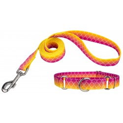 Fabulous Ombre Martingale Dog Collar & Leash
