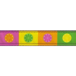 Citrus Blocks Ribbon Double Sided Dog Leash Limited Edition
