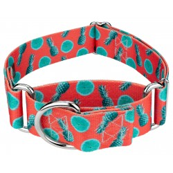1 1/2 Inch Tropical Tango Martingale Dog Collar