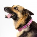 Bubblegum Pink Plaid Martingale Dog Collar & Leash - In Use View