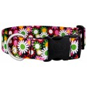 1 1/2 Inch Deluxe Daisy Fields Dog Collar