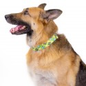 1 1/2 Inch Margarita Argyle Martingale Dog Collar - In Use View