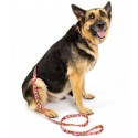 Pink Paisley Martingale Dog Collar & Leash - In Use View