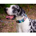 Tie Dye Flowers Martingale Dog Collar & Leash - In Use View
