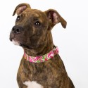 Pink Paisley Premium Collar & Leash - In Use View