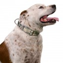 1 1/2 Inch Mountain Viper Camo Martingale Dog Collar - In Use View