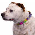 Paint Splatter Martingale Dog Collar & Leash - In Use View