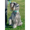 Green Paisley Leash-In-use